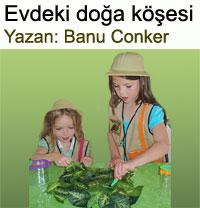 Evdeki doğa köşesi… Banu Conker