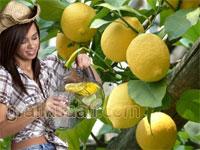 Kendinizle kavganız varsa - Hayat bir limon ağacıdır ona tadını siz katacaksınız