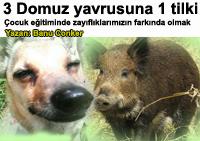 Çocuk eğitiminde zayıflıklarımızı bilmenin önemi - 3 küçük domuzcuk ve 1 tilki - Annelik Yazan: Banu Conker